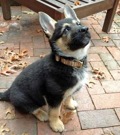 i would adopt a german shepherd puppy in a heartbeat <3