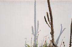 Les murs 12 #shadow #plants #walls #desert #village #ré #ilederé #frenchisland #explore #wander #minimal #leica #leicaq #leicacamera #leicaimages #streets #streetphotography #france #instadaily #summer #vibes #rough