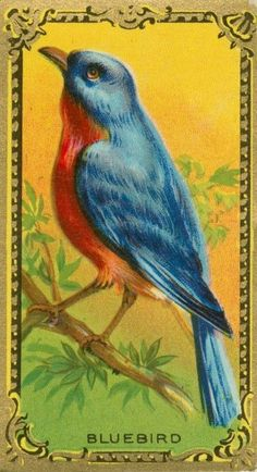 Lovely vintage bird card.  → For more, please visit me at: www.facebook.com/jolly.ollie.77
