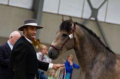 Horse (by www.rikjanssensfotografie.com)