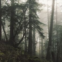 Nature Aesthetic, Aesthetic Photo, Pretty Photos, New Poster, Dark Forest, Mother Earth, Evergreen, Aesthetic Wallpapers, Cool Pictures