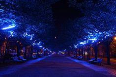 Illuminating blue lights at a park in Unter den Linden - Berlin @Chevrolet #MalibuStyle
