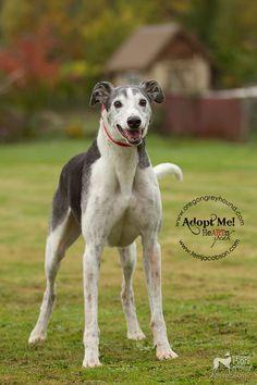 272_adopt-a-senior