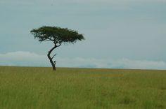 Masai Mara Photo by LeAnn Kurtz — National Geographic Your Shot