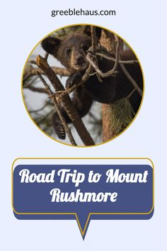 Our guide for a fun 3-day family road trip around Mount Rushmore and Black Hills, South Dakota - including Wind Cave, Mammoth Fossils and Bear Country USA.