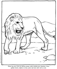Lion coloring page sheet - Zoo animals