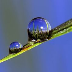 blue sky in dew drops on blade of grass