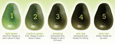 Ensure that you always enjoy the freshest tasting Avocados with these simple tips on how to tell if your Avocado is ripe.