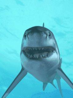 Köpekbalığı Hareketli Gif Resim