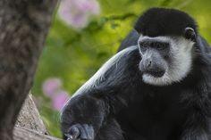 Una de la última vez que fui a #temaiken  #andresharambour #zoo #animal #ape