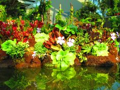 A multitude of exotic plants