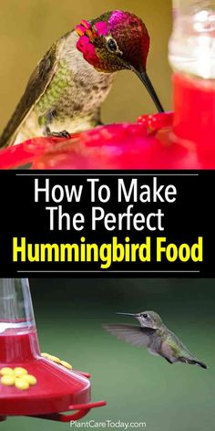 rx online Hummingbirds are wonderful tiny creatures and great garden additions. Flowers at… Hummingbirds are wonderful tiny creatures and great garden additions. Flowers attract these flying gems, a feeder and the perfect food get them visiting. Make Hummingbird Food, Hummingbird Garden, Hummingbird Feeder Recipe, Hummingbird Migration, Hummingbird Flowers, Hummingbird Mixture, Homemade Hummingbird Nectar, How To Attract Hummingbirds, How To Attract Birds