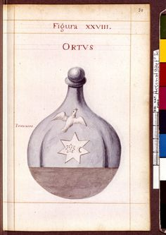 Figura XXVIII - Ortus - Sapientia veterum philosophorum, sive doctrina eorumdem de summa et universali medicina 40 hierogliphis explicata