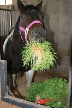 Equine Benefits - Fodder Systems - Healthy, fresh feed every day