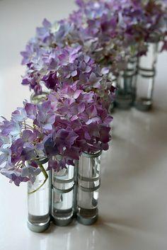 Hydrangea by mellow_stuff, via Flickr