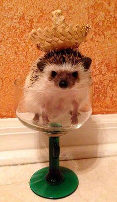 .hedgehog wearing a Sombrero.