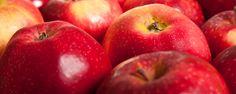 Jablka a jablečná dieta - Nová Země 2010