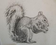 Squirrel Pencil Sketch :)   Alyssa Walker