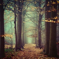 An Ending, A Beginning by Oer-Wout.deviantart.com. #forest #trees #photo