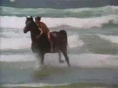 The Black Stallion - Scene of Alec learning to ride The Black. Free Horses, Big Horses, Spirit Horse Movie, Horse Movies, Horse Videos, Forever Book, Black Stallion, Horse World, Camera Shots