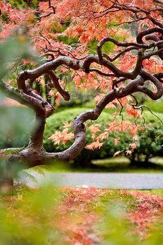 Beautiful Autumn , Japanese garden