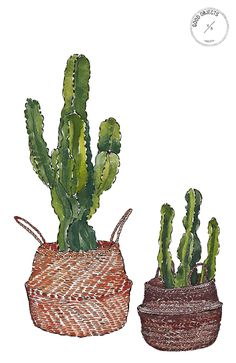 Good objects - Cactus n; baskets art print #goodobjects #watercolor #illustration
