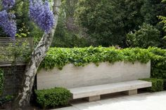 A stately custom seating area made of travertine to match the terrace. Above the bench, an Algerian Ivy (Hedera canariensis) provides a lush border. An existing mature Silver birch (Betula pendula) bends gracefully, complementing the straight lines of the bench and garden walll. Behind the tree, a slatted fence was built to provide privacy without blocking natural light.