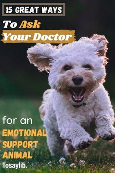 Emotional support animals can provide you with the affection and support that you need to relieve the symptoms caused by various mental conditions.    These samples will help you find the right words when figuring out how to ask doctor for emotional support animal.    #howtoaskdoctorforemotionalsupportanimal Mental Health Conditions, Mental Health Problems, Common Mental Disorders, Doctor Names, Animal Letters, Emotional Support Animal, Good Excuses, Being A Landlord, Your Pet