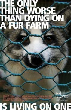 Wearing Fur is Ugly and if you wear it, you support Animal Abuse and Animal Cruelty ! Please don't support cruelty and abuse go Fur Free!