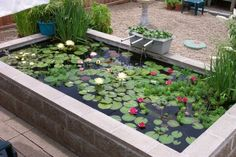 Concrete Block Pond is part of this summer's project plan.