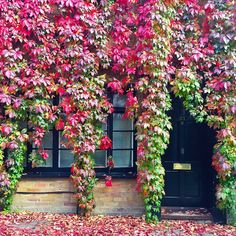 Peek-a-boo mews  #london #londonwanderings #prettycitylondon #autumninlondon #fallfoliage #travel #neighbourhoodnumbers #housesofldn #mewsingaroundldn #doorsofengland #doortraits