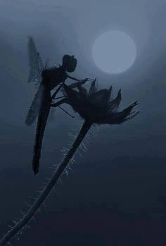 Dragonfly, looks like a Fairy