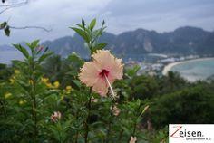 Thailand Inselblume Thailand, Plants, Tour Operator, Travel, Flora, Plant, Planting