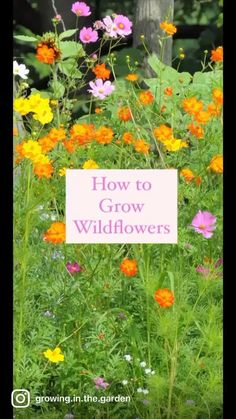Planting Flowers From Seeds, Growing Flowers, Wild Flower Meadow, Wild Flowers, Ground Cover Plants, Environmental Factors, Wildflower Seeds, Garden Care, Autumn Garden