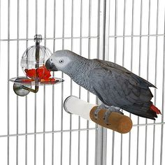 Super tough, cage mounted foraging toy and feeder for all sized parrots with a tray to prevent food loss.