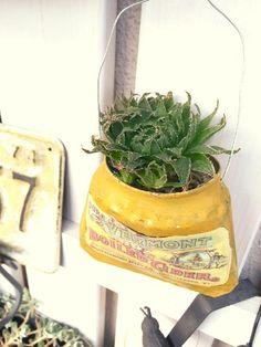 ハオルチアの画像 by 松 祐さん|多肉植物と植え替えとリメ缶 (2015月8月6日)|みどりでつながるGreenSnap
