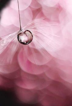47 best Ideas for photography macro flowers water droplets Dew Drops, Rain Drops, Drip Drop, Bokeh Photography, Spring Photography, Photography Flowers, Urban Photography, White Photography, Fotografia Macro