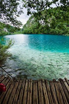 Turquoise, Plitvice Lake, Croatia                                                                                                                                                     More