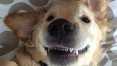 これでたくさん食べられるワン!歯の矯正をしたワンコの「笑顔」が話題に - グノシー