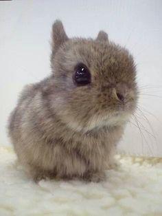 Bunny!!!!!