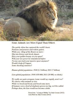 """A poem calling for the saving of lions from extinction written by Judy Croome in 2010 from """"a Lamp at Midday"""" by Judy Croome Big Cats, Cats And Kittens, Elephant World, Animal Poems, All Animals Are Equal, Chief Seattle, Lions, Equality"""