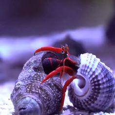 Ocean Creatures, Weird Creatures, Beautiful Sea Creatures, Animals Beautiful, Saltwater Aquarium, Aquarium Fish, Funny Animal Videos, Cute Funny Animals, Pretty Fish