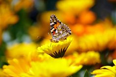Free Photo: Butterfly, Insects, Animal, Morpho - Free Image on Pixabay - 169924
