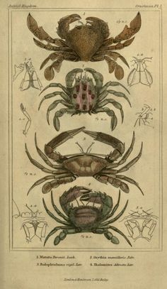 3 (Plates) - The animal kingdom, arranged according to its organization, serving as a foundation for the natural history of animals : - Biodiversity Heritage Library