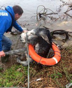 Niesamowita akcja ratunkowa! Tonący osioł obdarzył swoich bohaterów uśmiechem od ucha do ucha