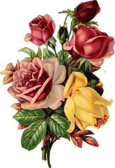 Plaatjes : Rose - rose Glanzbilder - Victorian Die Cut - Victorian Scrap - Tube…