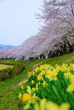 Kakunodate, Akita, Japan