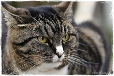 Suvikumpu: Ihaninta - juuri nyt Cats, Animals, Gatos, Animales, Animaux, Animal, Cat, Animais, Kitty
