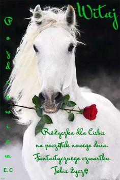 Happy Name Day, Happy Names, Happy Birthday Horse, Horses, Pictures, Animals, Gallery, Disney, Happy