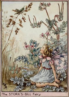 "pagewoman: "" The Stork's-bill Fairy by Cicely Mary Barker """